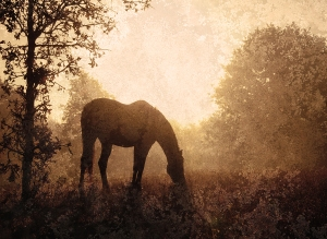 Silhouette of a grazing horse against sunrise through fog, an antique textured abstract image in muted sepia tone